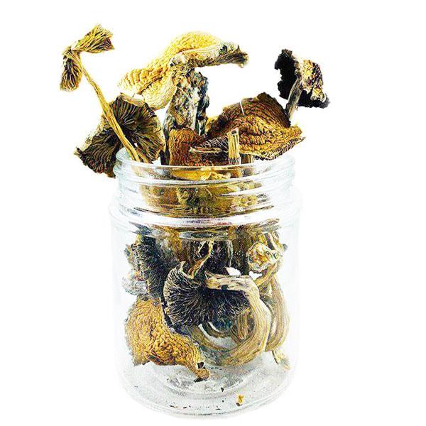 Golden Emperor Mushrooms